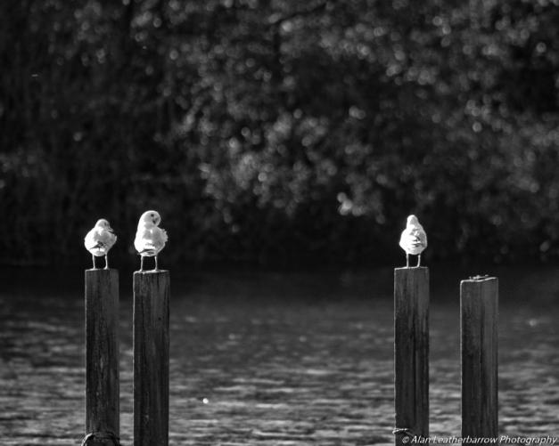 gullsonposts-8731