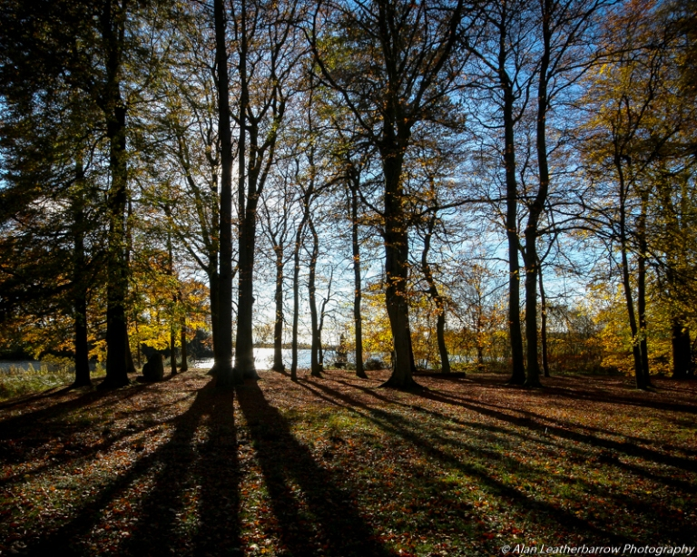 silhouettetrees-8795