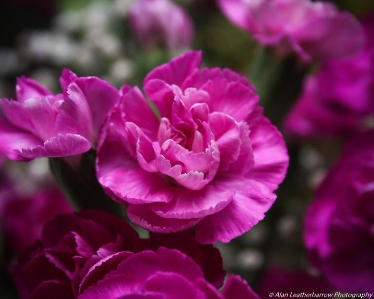 flower-9016