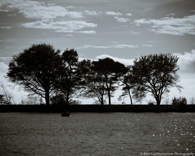 silhouettetrees-8768