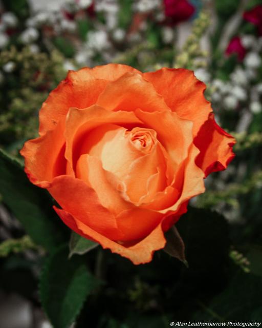 flower-8863