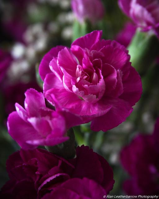 flower-9010