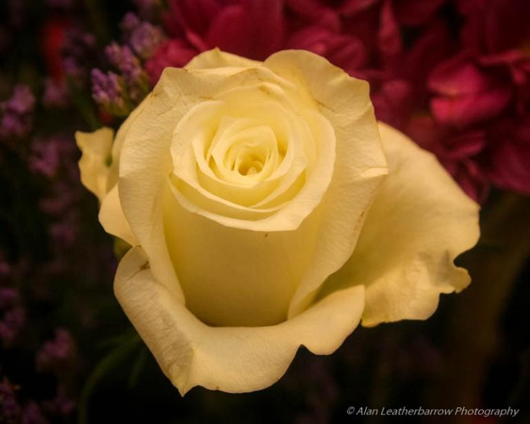 Flower-9881