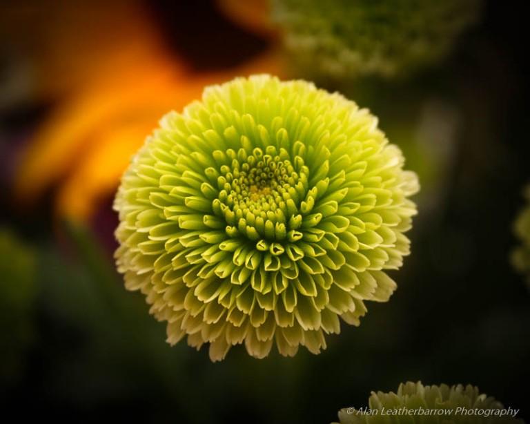 Flower-9883