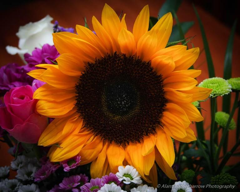 Flowers-9847