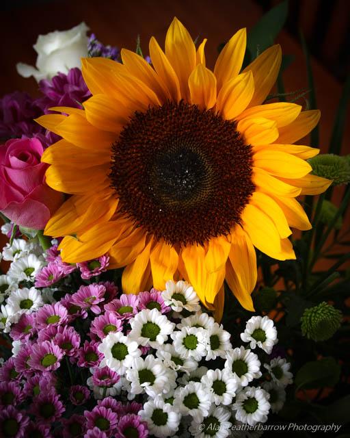 Flowers-9876