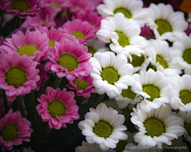 Flowers-9886