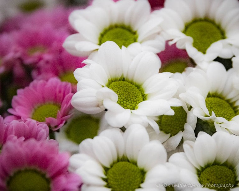 Flowers-9890