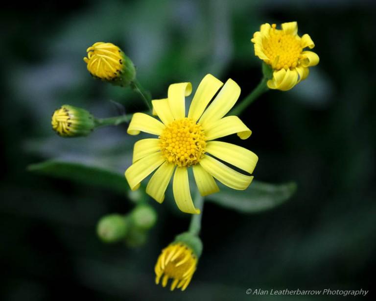 Flowers-9902
