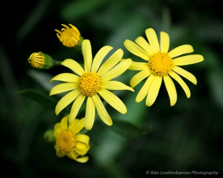 Flowers-9906