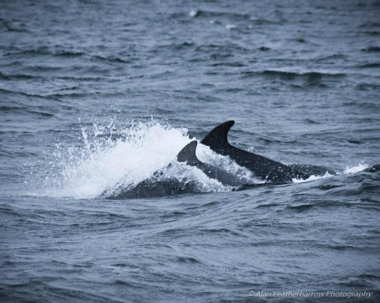 WildDolphins-0097