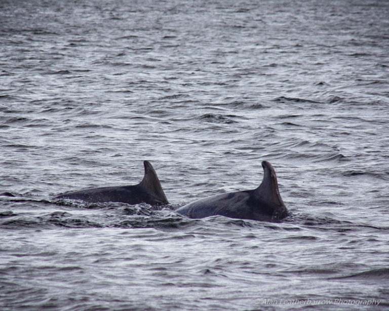 Dolphins-0157