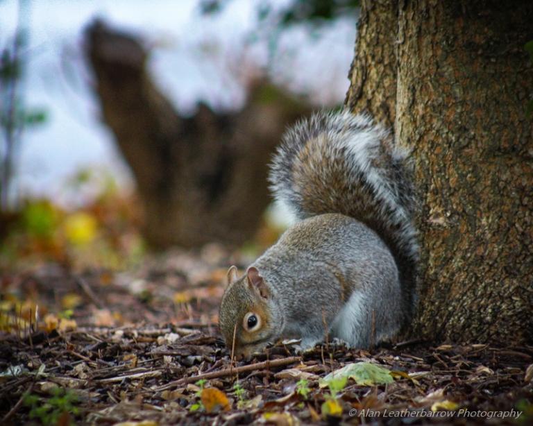 Squirrel-1067