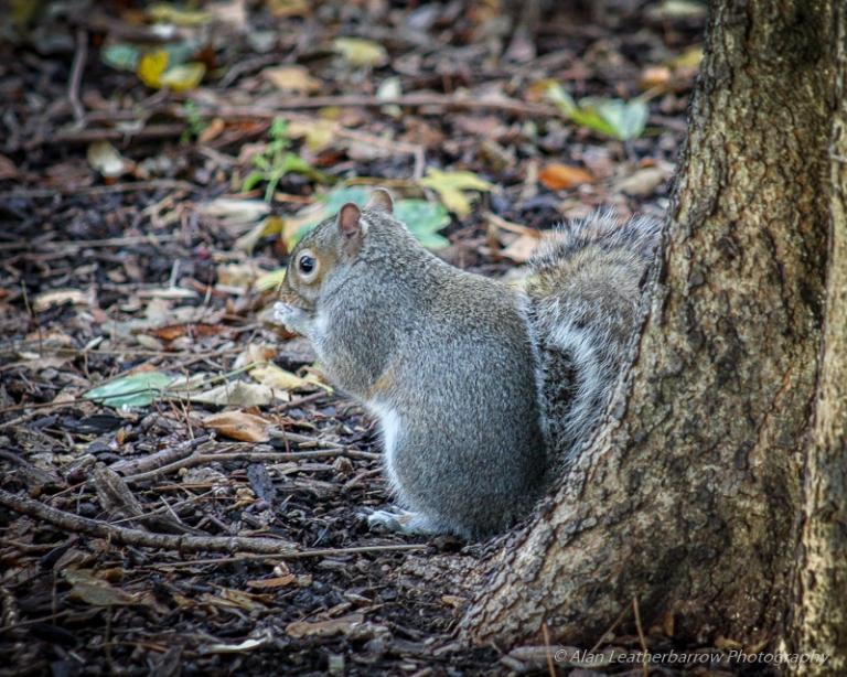 Squirrel-1116