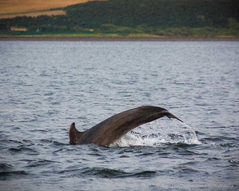 Dolphin-0310