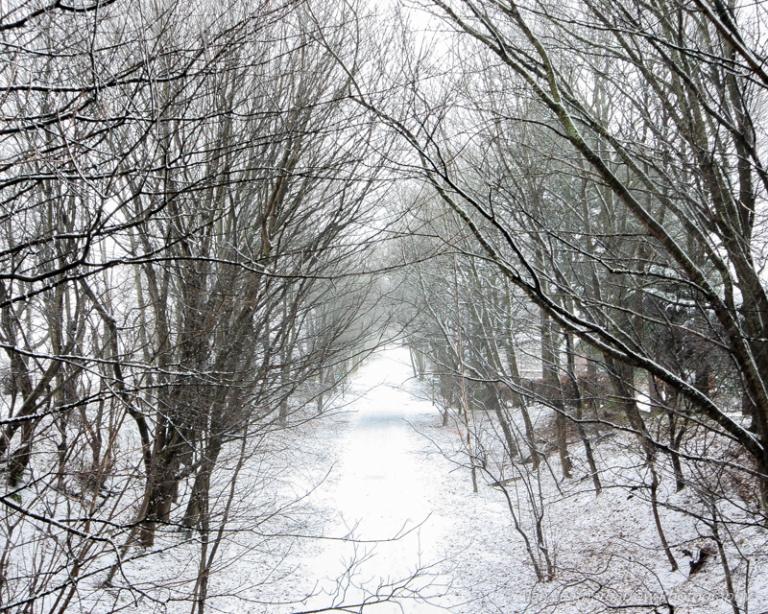 SnowyScene-1597