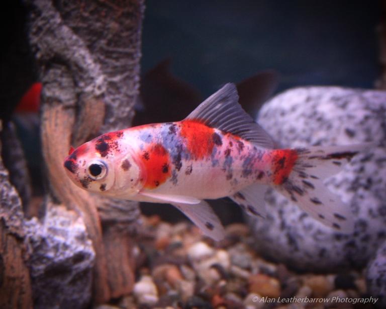 Fish-1747