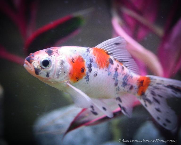 fish-1837